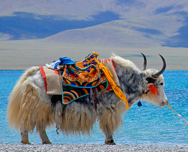 Lhasa Namtso Lake and EBC Tour